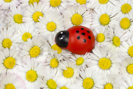 coccinellidae: Ladybird figurine with daisies
