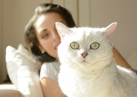 alertness: Young woman with white cat