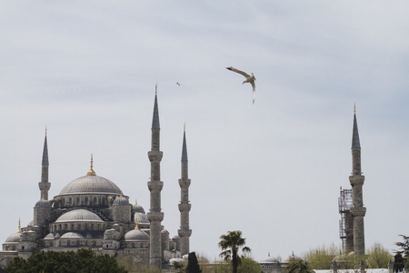 blue mosque: Turkey, Istanbul, Blue mosque and seagull