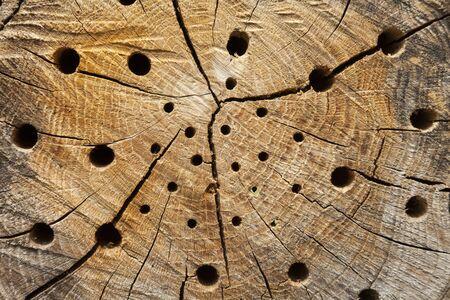 full of holes: Tree trunk with nesting holes Stock Photo