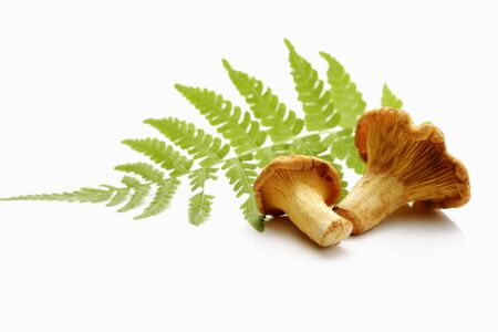 on leave: Chanterelles and fern leave Stock Photo