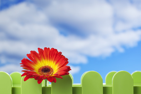flower box: Gerbera flower in flower box, sky and clouds Stock Photo