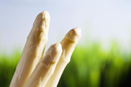 white asparagus: White asparagus