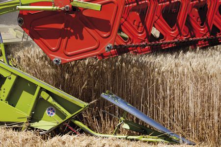 cosechadora: Cosechadora en el campo de trigo