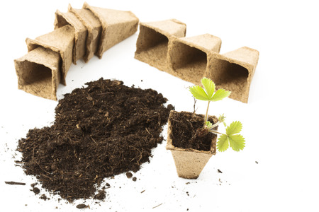 peat: Strawberry plant, soil, peat pots on white background