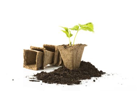 peat: Raspberry plant, soil, peat pots on white background