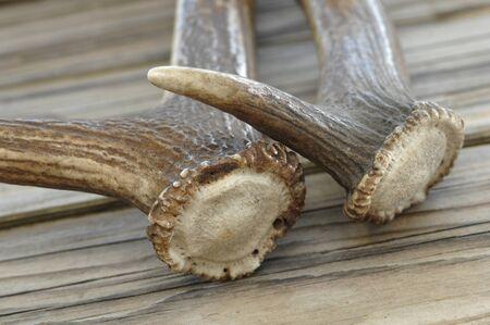 antlers: Antlers