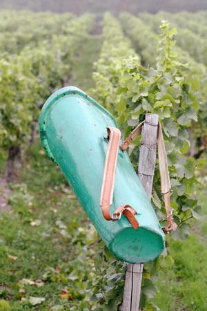 alcohol series: Back-basket in vinyard