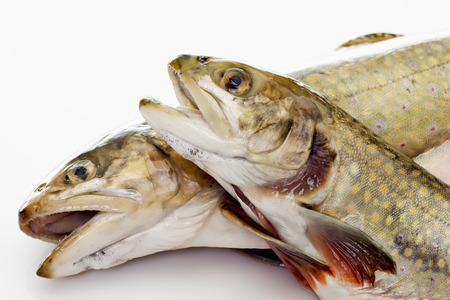 char: Fresh fish, char and salmon Stock Photo