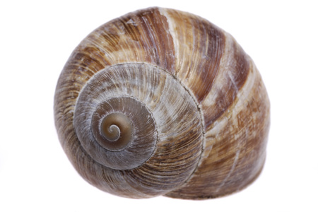 traditionally french: Shell of escargot against white background,close up Stock Photo