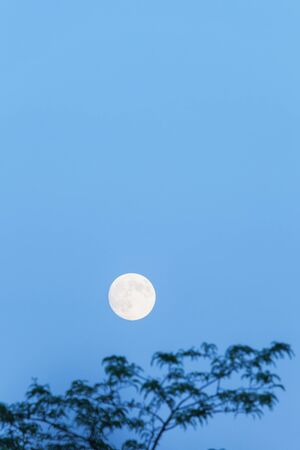 blue hour: Full moon and tree, copy space, blue hour, evening sky