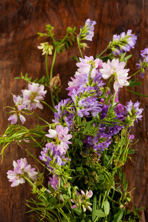 vetch: Wild flowers, crown vetch and tufted vetch Stock Photo