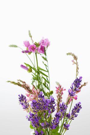 vetch: Wild flowers, vetch, crown vetch and tufted vetch