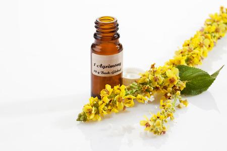 Agrimonie, bach bloem, apotheker fles Stockfoto