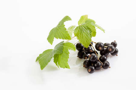 currants: Black currants, white background