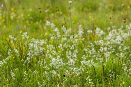 fleurs des champs: Allemagne, Bavi�re, n�glig�es prairies, les herbes et les fleurs sauvages Banque d'images