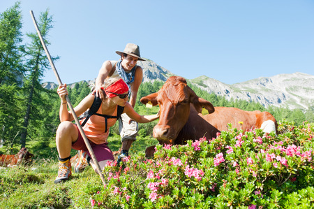 stroking: Austria,Salzburg Country,Young couple hiking in mountains of Niedere Tauern,woman stroking cow