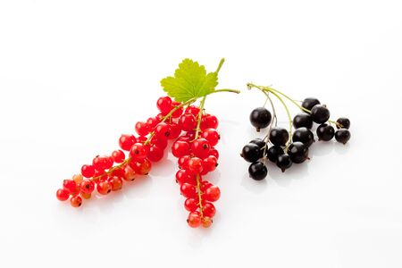 black currants: Red and black currants