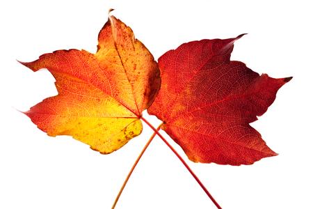autumnally: Autumn leaves