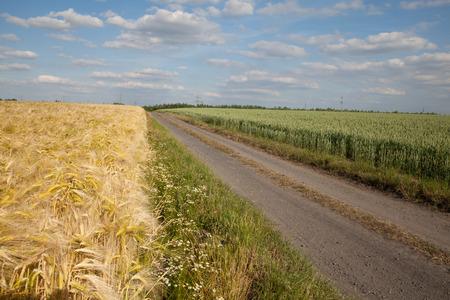 dirt track: Germany, North Rhine-Westphalia, grain fields, barley field, wheat field, dirt track