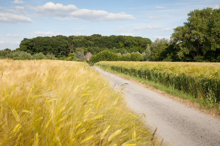 grain fields: Germany, North Rhine-Westphalia, grain fields, barley fields and dirt track