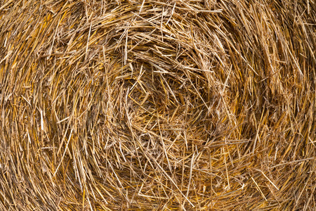 a straw: Close up of straw bale