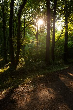 tranquil atmosphere: Germany, evening mood in forest