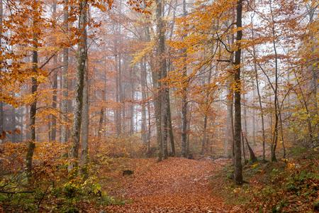 ドイツ ベルヒテス、秋の森、霧
