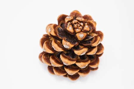pinecones: Pine cone