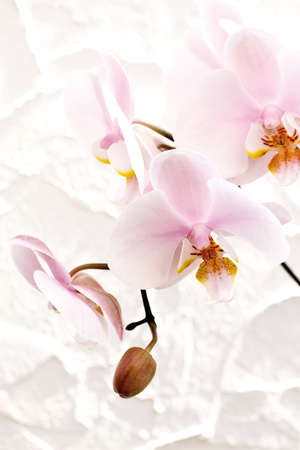 orchidaceae: Orchid blossom (Orchidaceae), close-up Stock Photo