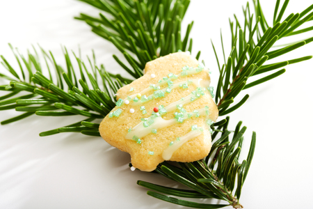 fir twig: Tree shaped Christmas cookie on fir twig