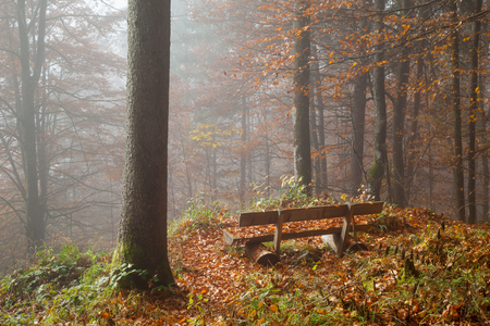 autumnally: Germany, Berchtesgadener Land, bench in autumn forest, foggy Stock Photo