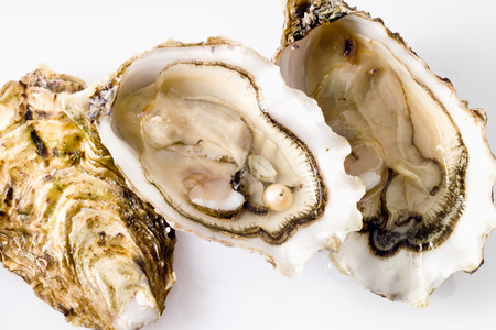 oyster: Oysters with pearl