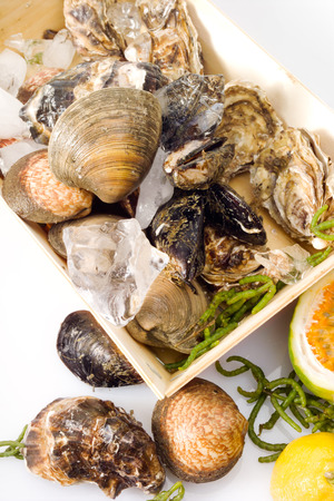 icecubes: Oysters, venus calms and blue mussels in wooden box