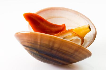 almeja: Venus clam