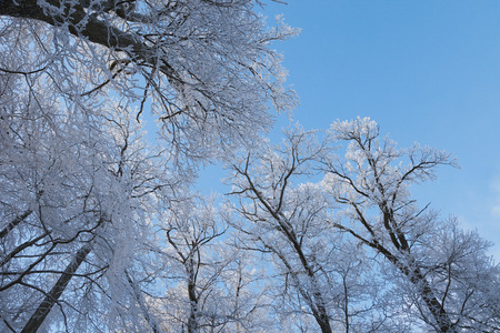 twigs: Palatinate Forest in winter, twigs