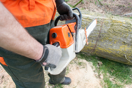 logging industry: Netherlands, Lumberjack at work, chainsaw Stock Photo