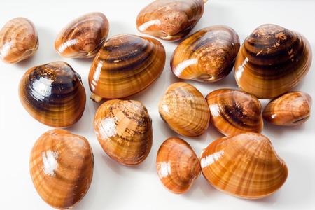 venus: Venus clams