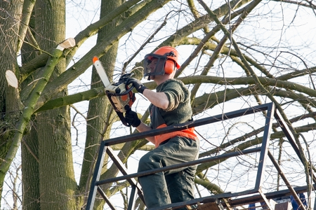 Netherlands, Lumberjack at work, chainsaw Foto de archivo