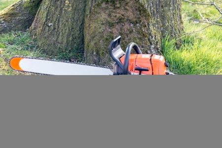 logging industry: Chainsaw of lumberjack
