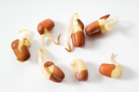 adzuki: Adzuki beans, sprouts, white background
