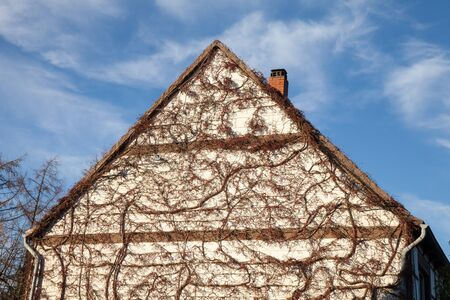 house gable: Germany, house facade, gable, overgrown, virginia creeper Stock Photo