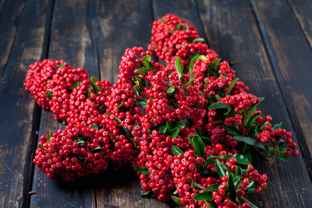 autumnally: Firethorn, red berries on wood