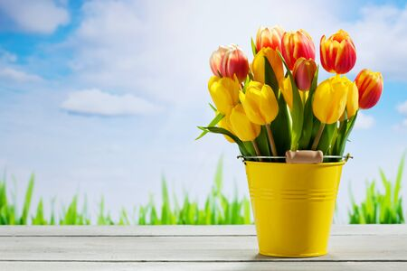 Bouquet of multicolored tulips  in yellow bucket against blue sky