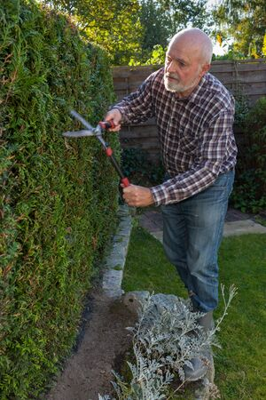 clippers: Mature man cutting hedge with garden clippers