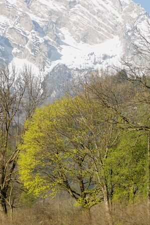 mountainscape: Austria, Salzburger Land, Tree in spring