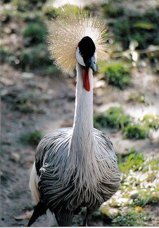 Exotic bird Stock fotó