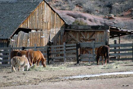 horses near old barn Stock fotó