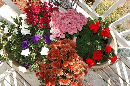 horizontal shot of potted flowers on a backyard deck