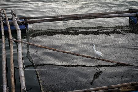 egret: Little Egret Stock Photo